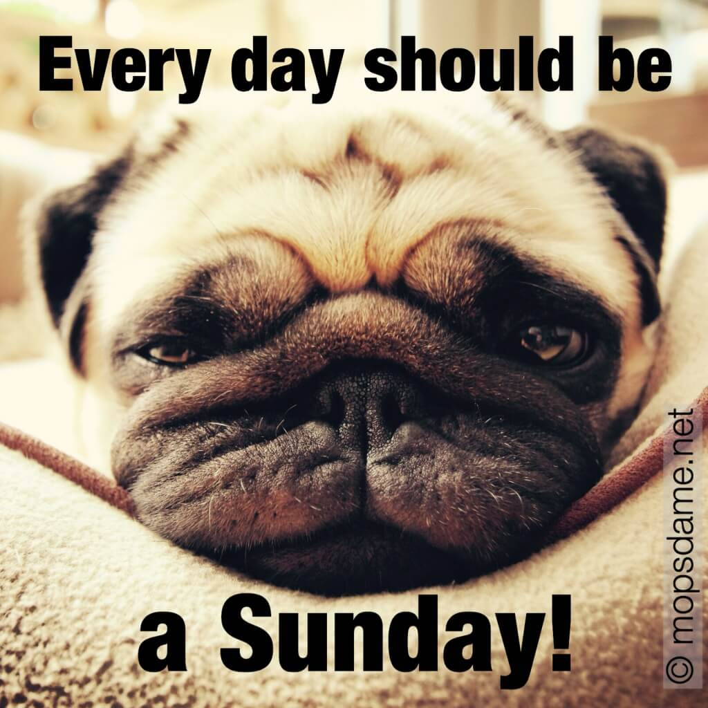 Every day should be a sunday! Pug Zoé
